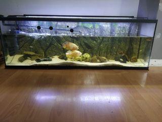 acuario completo urge vender