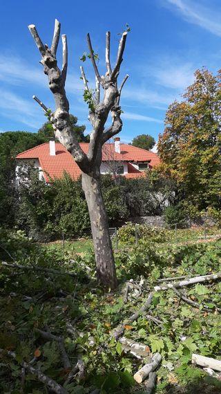 jardinero en la sierra de Madrid