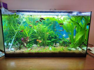 acuario 60 l con filtro, luz y calentador