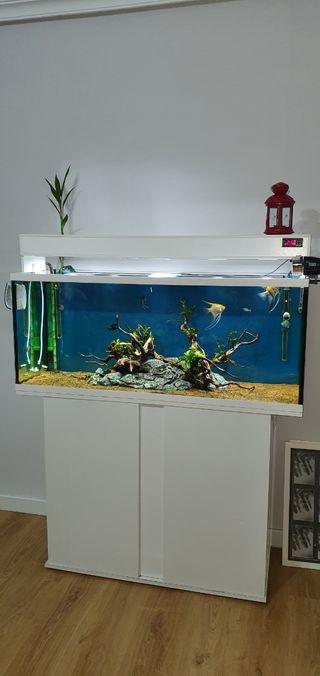 acuario 240l, mesa y accesorios