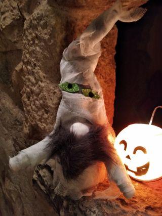 Halloween Gnomo Momia