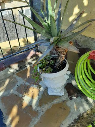 Macetero con Aloe vera