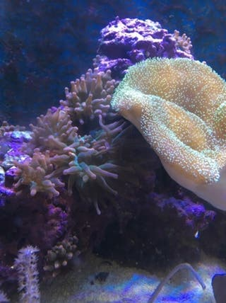 Equipo acuario marino