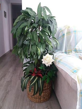 Planta decoracion