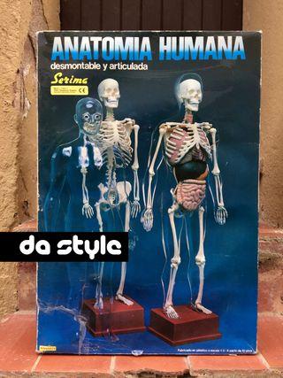 Figura Anatomía Humana Desmontable Serima