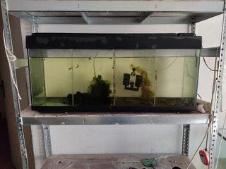 Acuario 150 litros, luz, filtro, plantas y troncos