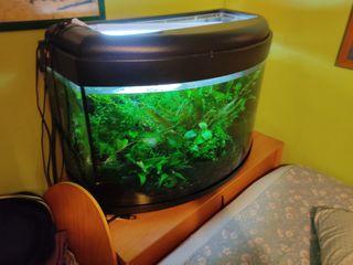 Acuario 200l + luz + calentador + plantas