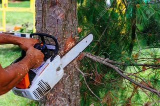 cortar y podar árboles
