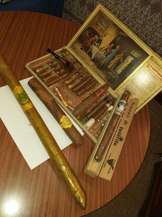 puros para coleccionistas