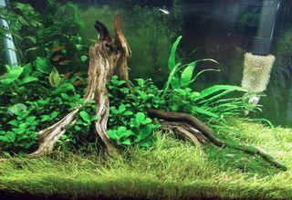 Lote plantas de acuario 24€
