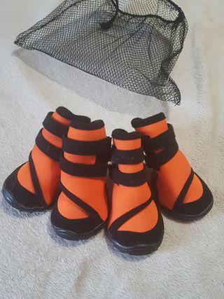 zapatos de perros