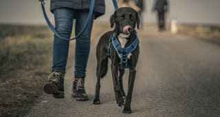 Paseadora o cuidadora de perros