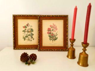 Cuadros botánica vintage