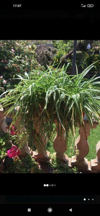 Jardinera con cintas muy grandes OFERTON