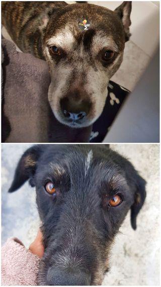 Cuidadora/Paseadora de perros