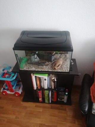 acuario y su mueble