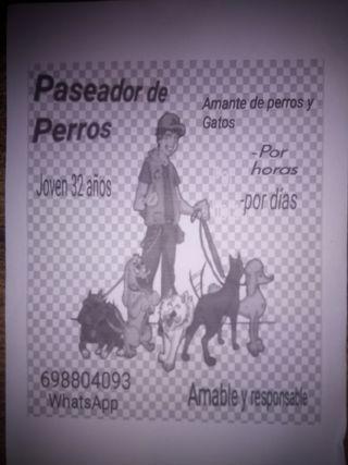 cuidador y paseador de perros