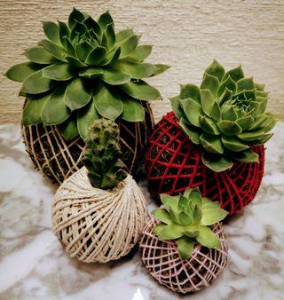 Regala Kokedamas! Variedad plantas y diseños