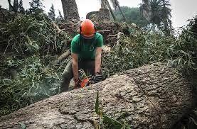 Tala de árboles y trabajos en altura