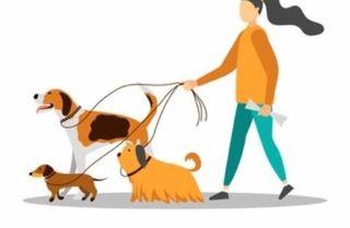 Cuidadoras y paseadores de perros