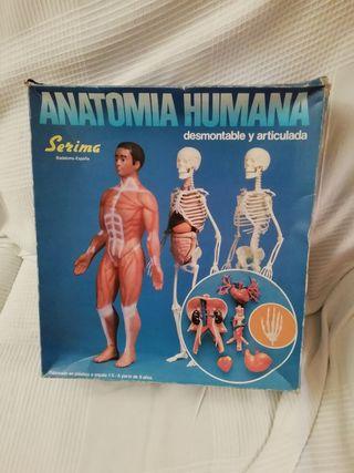Juego antiguo del cuerpo humano