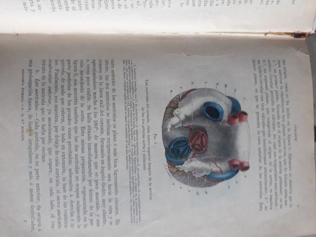 Libros Tratado de anatomia humana L.Testut