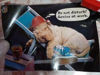 póster perrito