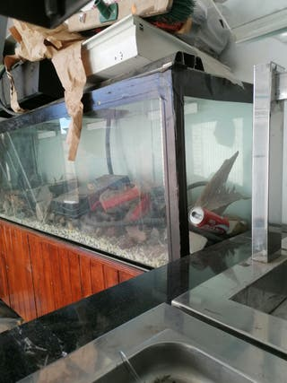 Pecera, acuario