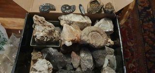 Minerales y fosil
