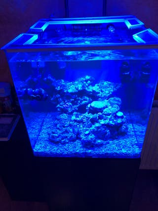 Fabuloso acuario blau 91l.