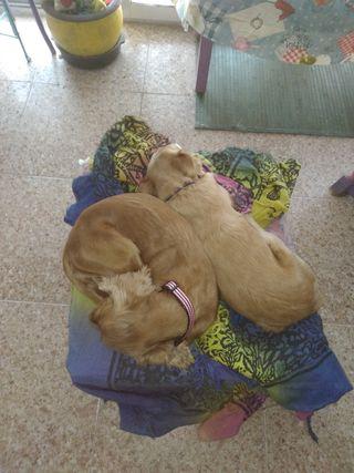 cuidadora de perros en Benidorm