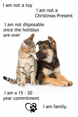 Cuidadora de perros y paseadora