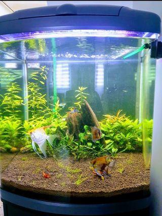 acuario será 150 litros con mueble y equipado