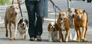 Cuidador/Paseador de Perros con Experiencia