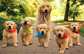 Cuidadora de Perros
