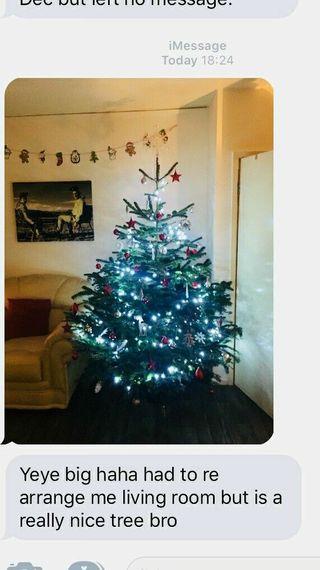 real Christmas trees premium nordmann firs