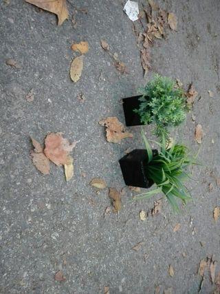 plantas artificiales adornos