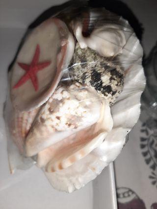 Concha Marina con caracolas