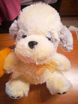 perro amarillo con lacito a juego