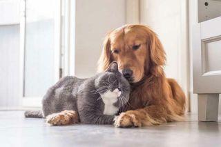 Cuidado de animales