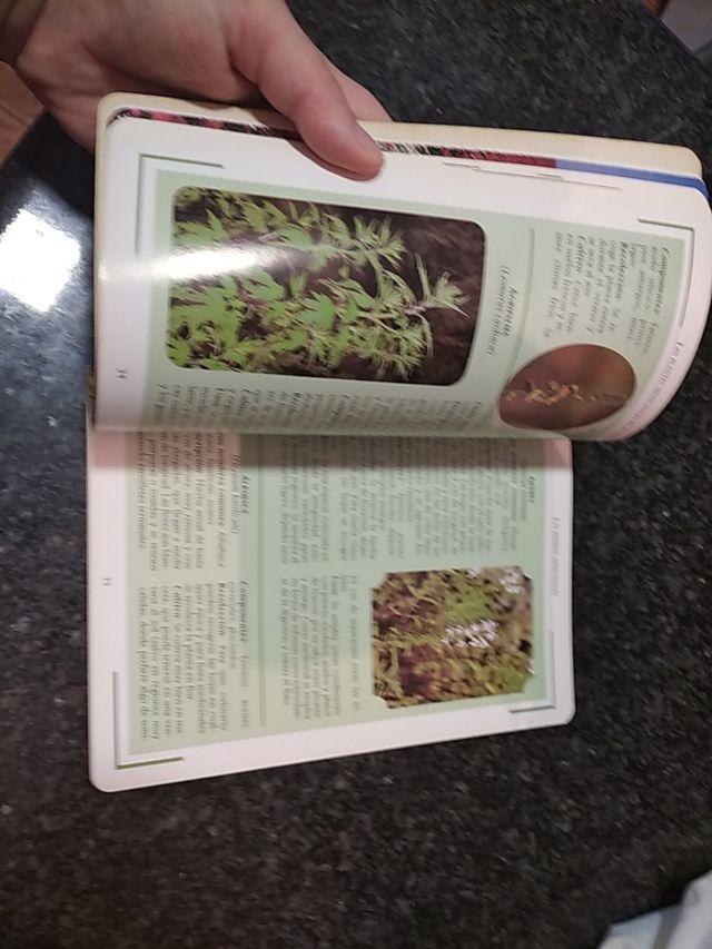 las plantas medicinales en el jardín