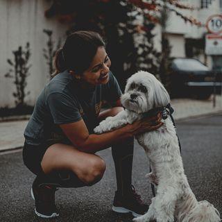 Canguro de perros y otras mascotas