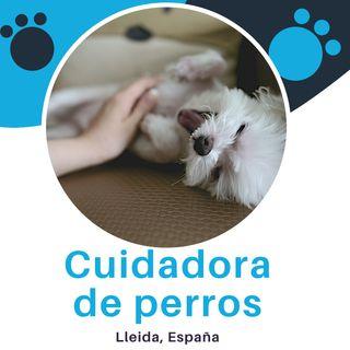 Cuidador de perro - Guardería canina