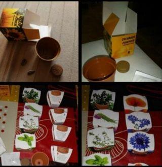 kit de mini maceta con semillas