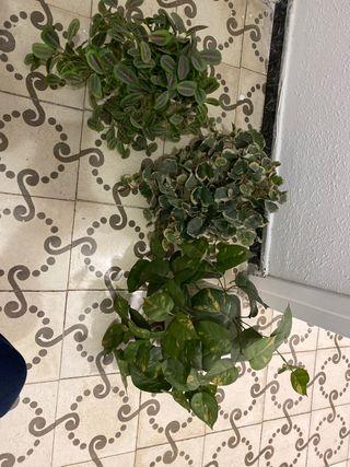 3 plantas decorativas artificiales