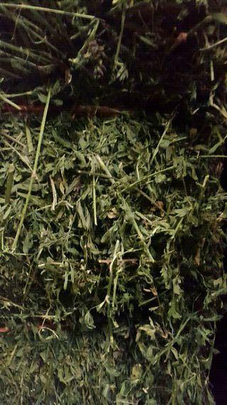 venta forraje hierba alfalfa paja todo de primera