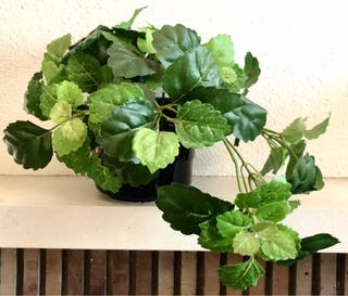 Seis plantas artificiales