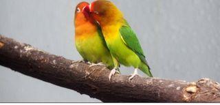 Cuido a tu pájaro cuando no puedas