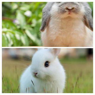 Cuido de tu conejo!