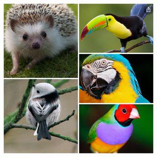 Cuido de animales exóticos
